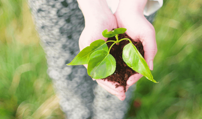 Organic Coffee, Ethical Coffee & Sustainable Coffee